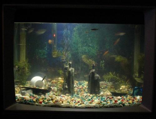 Recycle old television aquarium