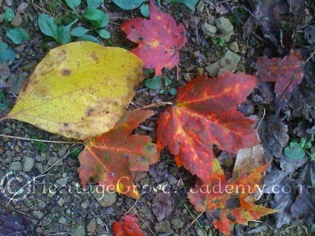 Gods Vibrant Fall Colors