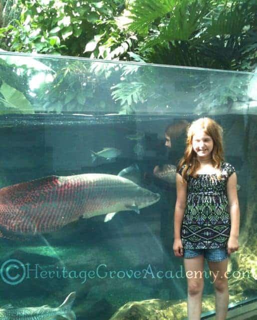 He Likes You! -At Aquarium