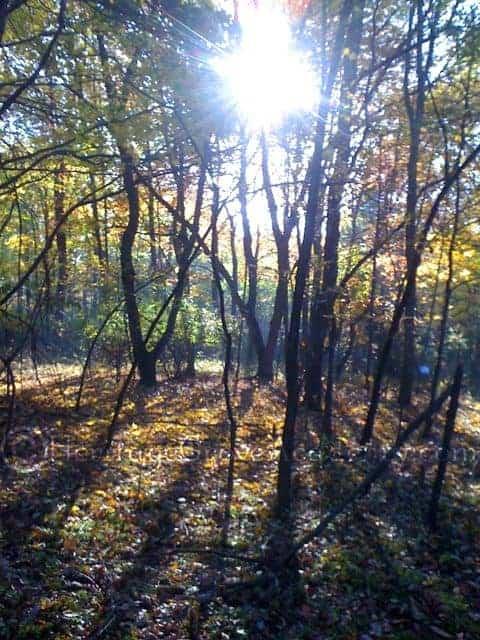 Morning Sunshine in Fall