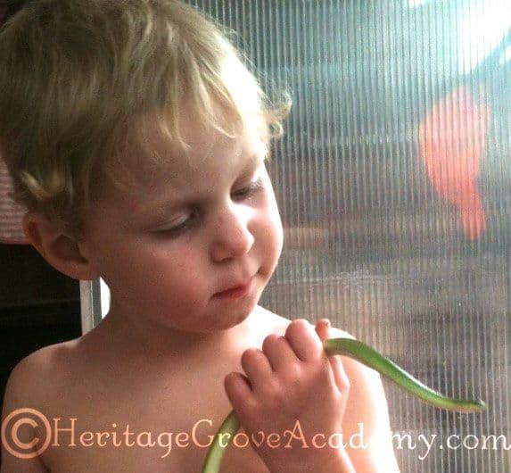 Observing a Green Grass Snake