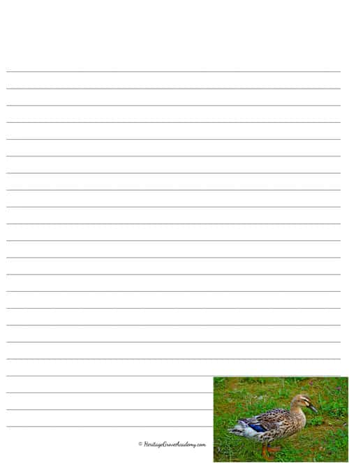 Duck Notebooking Pages