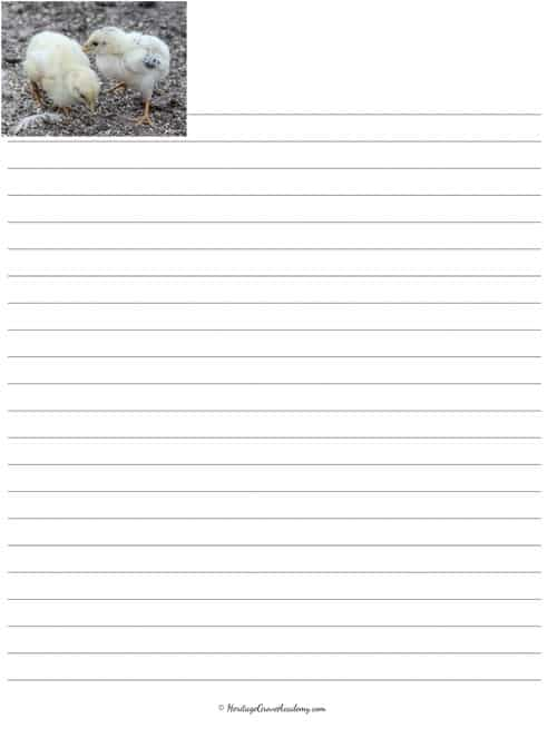 Chicken Breed Penmanship Pages
