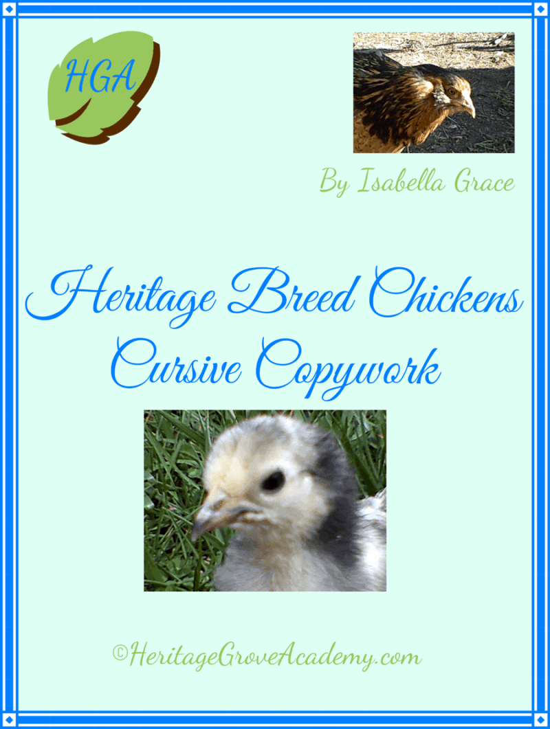 Chicken breed cursive handwriting book.